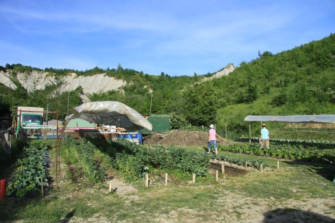 orto germoglio comunità