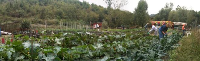 orto germoglio naturale